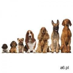 Próbki karm dla psów: z karmą - Forza10 DOSTAWA 24h GRATIS od 99zł - ogłoszenia A6.pl